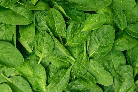 fresh-spinach-leaves-whole-image